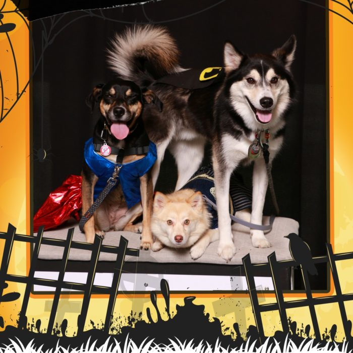 Kids & Pets Trick or Treat Photo Gallery 2019 #Pawesome